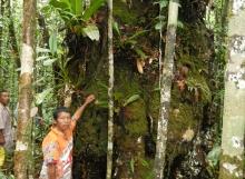 Chri-Andrew-with-212-cm-dbh-Pakaraimaea-dipterocarpacea-Ayanganna-savannas
