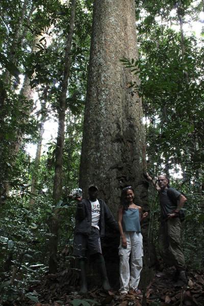 Gilbertiodendron dewevrei