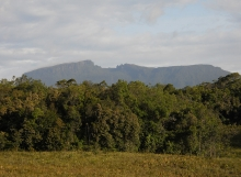 Pakaraimaea-dominated-fringing-forest-Ayanganna-savannas