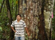 Peter-Joseph-with-134-cm-dbh-Pakaraimaea-dipterocarpacea-Ayanganna-savannas