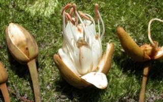 fungi_new_phyto