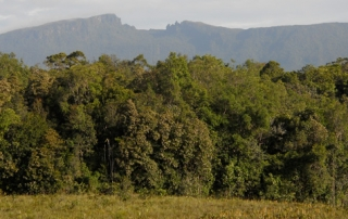 p_dipterocarpacea_forest